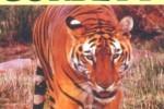 ಬಿಳಿ ಸಾಹೇಬನ ಭಾರತ (ಕಾರ್ಬೆಟ್ ಕಥನ – ಅಂತಿಮ ಅಧ್ಯಾಯ)