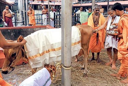 ilayaraja-cow-donation