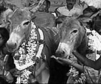 donkeys_wedding_rains